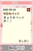 20080529_11